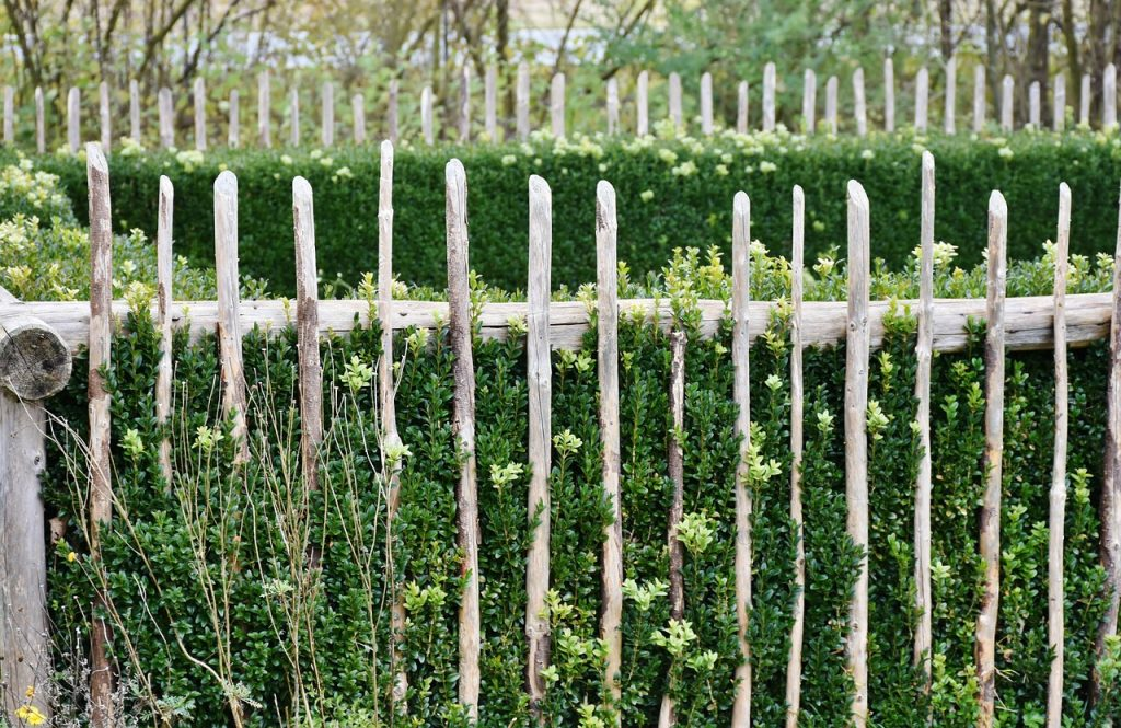 prútene ploty 2