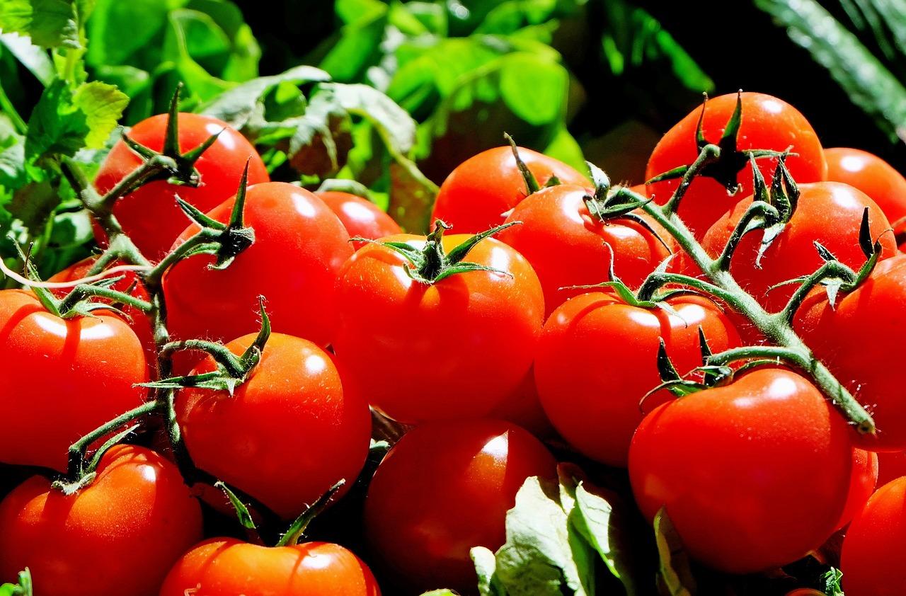Viete, ako pestovať paradajky? Tu je komplexný postup a návod