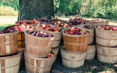 Drvič ovocia ako praktický pomocník vášnivých pestovateľov