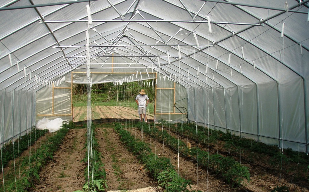 Fóliovník a parenisko nesmú nadšencom záhradkárčenia chýbať. Ako nájsť tie najlepšie?
