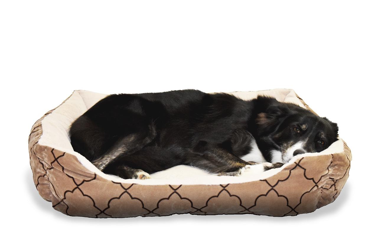 Pelech pre psa ako pohodlná zvieracia leňoška. Čo všetko ovplyvňuje jeho výber?