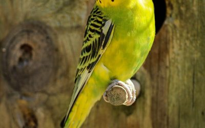 Nenároční papagáji, ktoré chovejte aj u seba doma