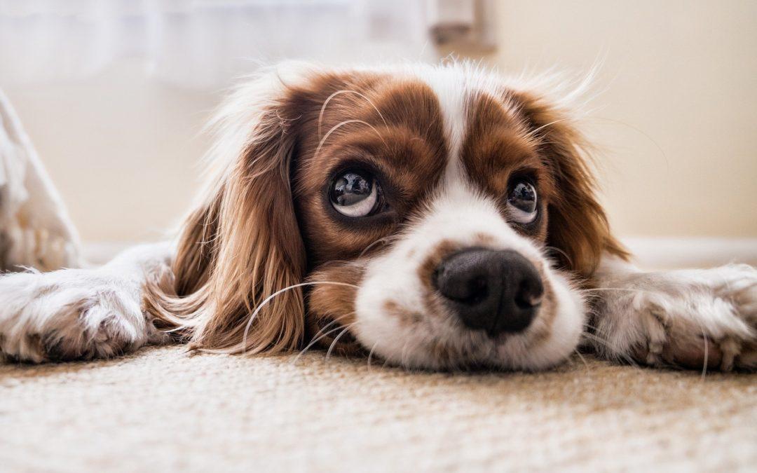 Čo by ste mali vedieť, ak máte doma klimatizáciu aj zvieratko